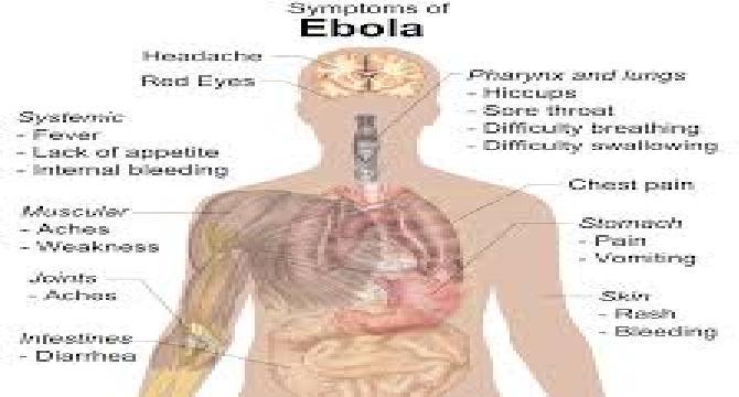 Basic Facts About Ebola Virus Disease ( Part 2)