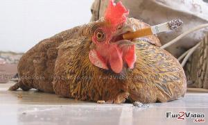 Health Smoking Is Very Dangerous For Your Health
