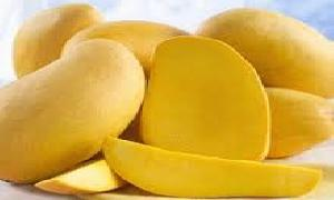 Mango the king of fruits