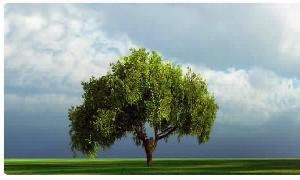 Be like a good tree