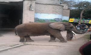 Animals in Lahore Zoo