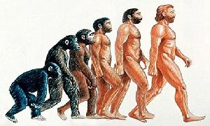 Human and Primates Evolution